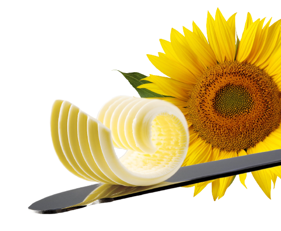 sunflower used for reolì spreadable oil